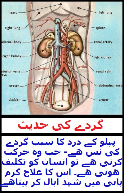 Widget_Health_TN_Kidney Pain Hadith